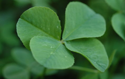 Debunking the History and Mystery Behind the Four-Leaf Clover