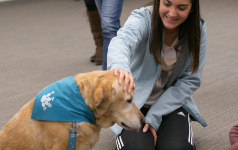 Students De-Stress with Therapy Dogs